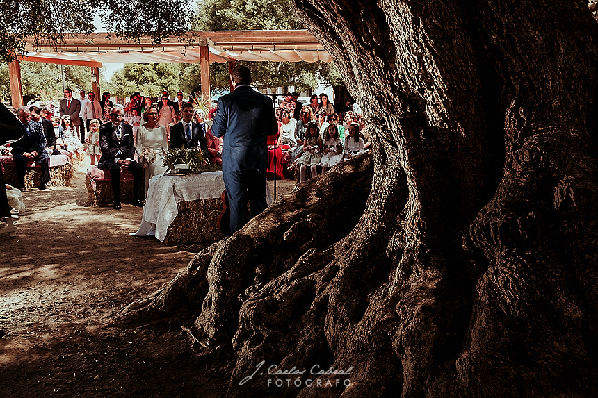 ceremonia boda civil bajo árbol